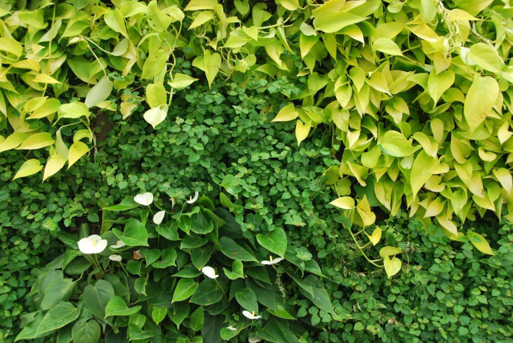 Kleurvariaties SemperGreenwall indoorbeplanting
