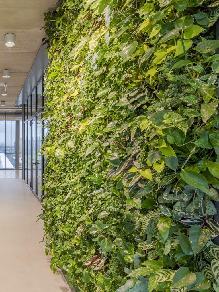 Indoor beplanting SemperGreenwall kantoor